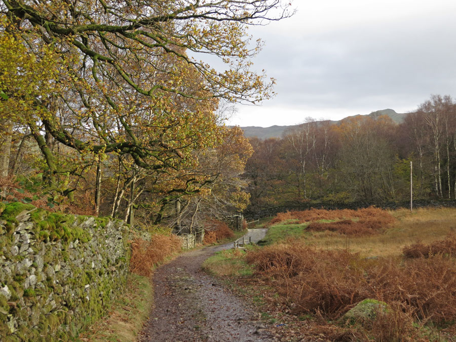 The Pine Rigg track