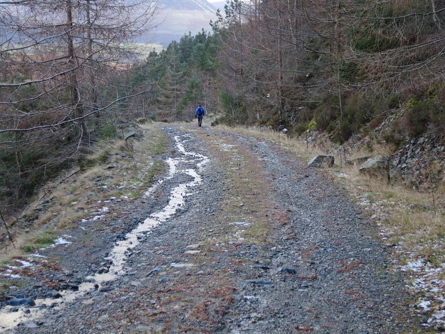Forest track, Shoulthwaite Gill