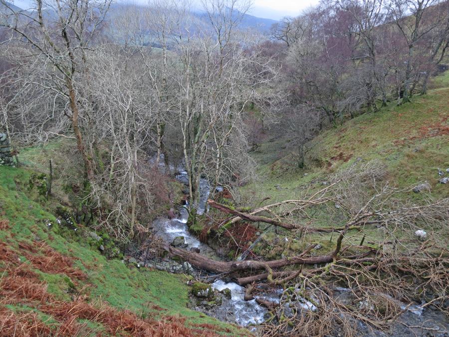 Fallen tree, Brockle Beck