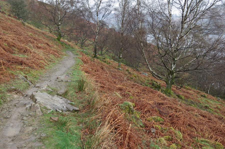 The lakeside path