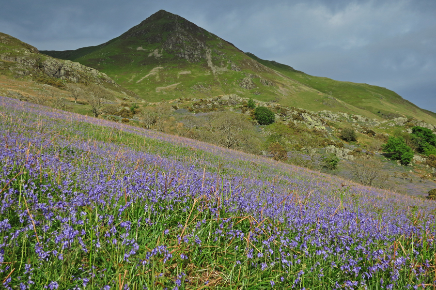 Rannerdale Bluebells and Whiteless Pike