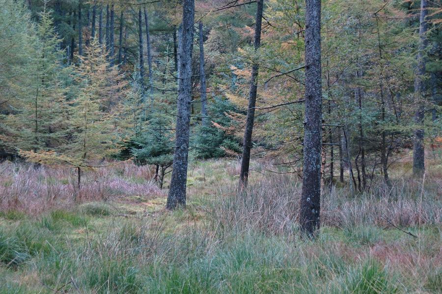 Burtness Woods