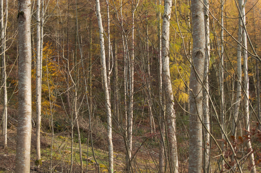 Latrigg Woods