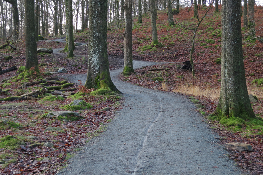 Path 'improvements', Penny Rock Wood, Grrrrr