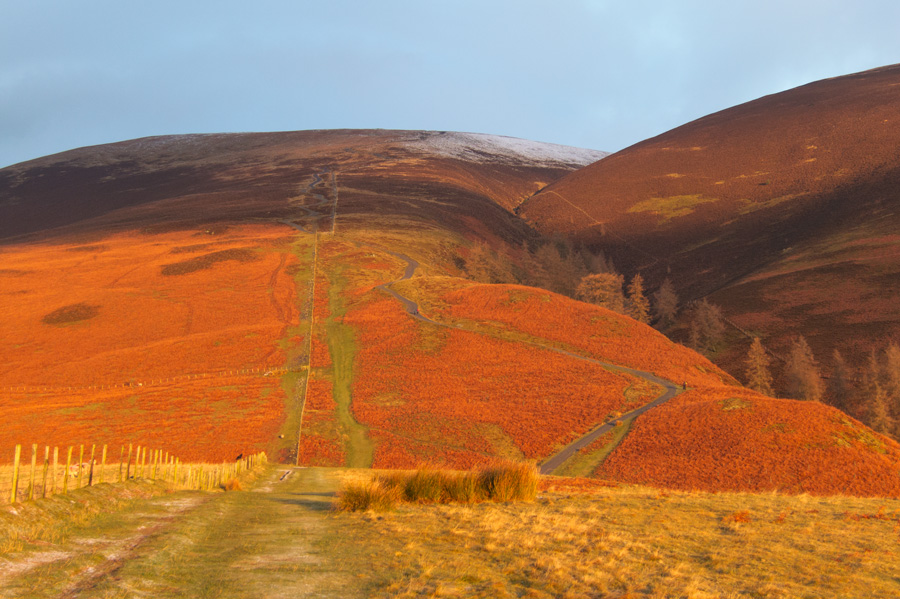 The dead bracken on Jenkin Hill catches the early morning light