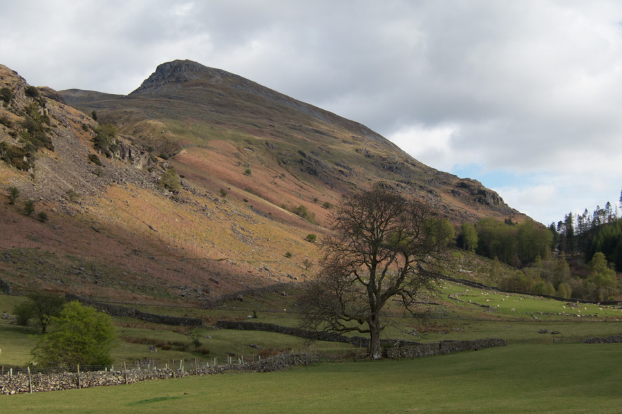 Looking up towards Browncove Crags from near Swirls