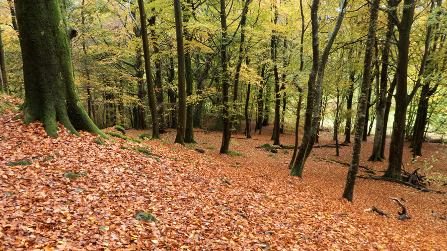 Castlehead Wood