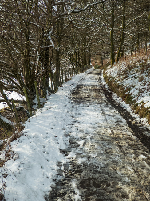 On the road, currently closed, through Brundholme Woods