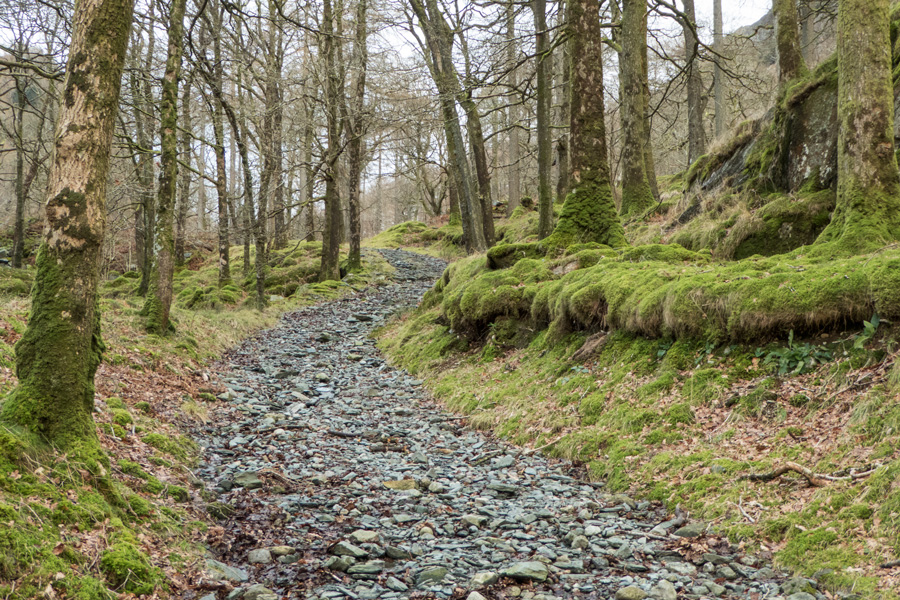 Path in Dalt Wood