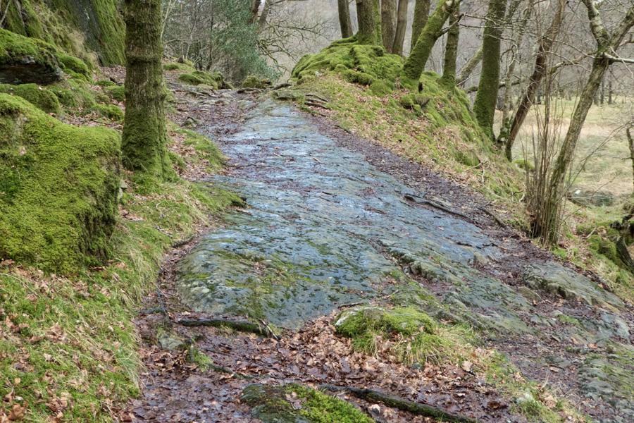Path through High Hows Wood