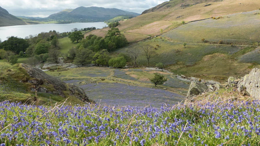 Crummock Water and Low Fell