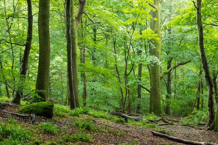 Castlehead Woods