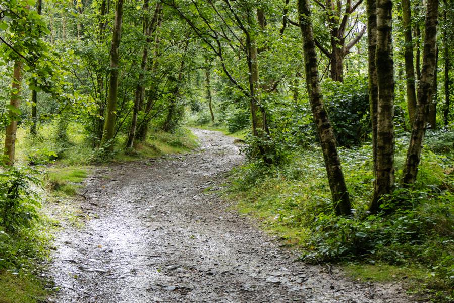 Springs Wood