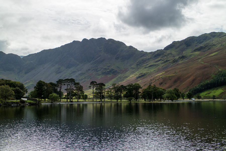 Buttermere Pines with Haystacks behind