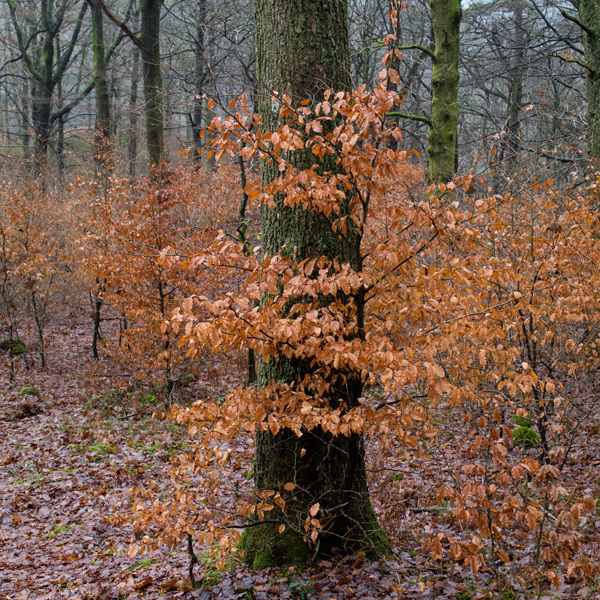 Penny Rock Woods