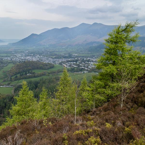 The Skiddaw fells from Walla Crag